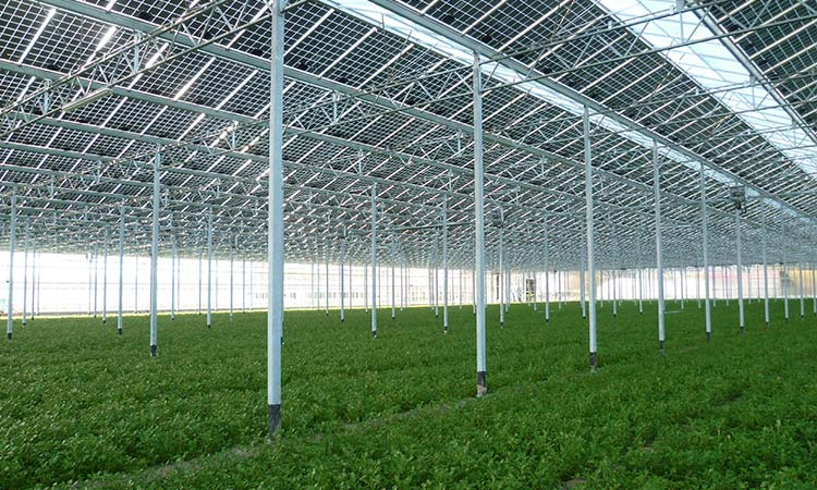 Photovoltaic-greenhouse-bo%c3%a9-copy