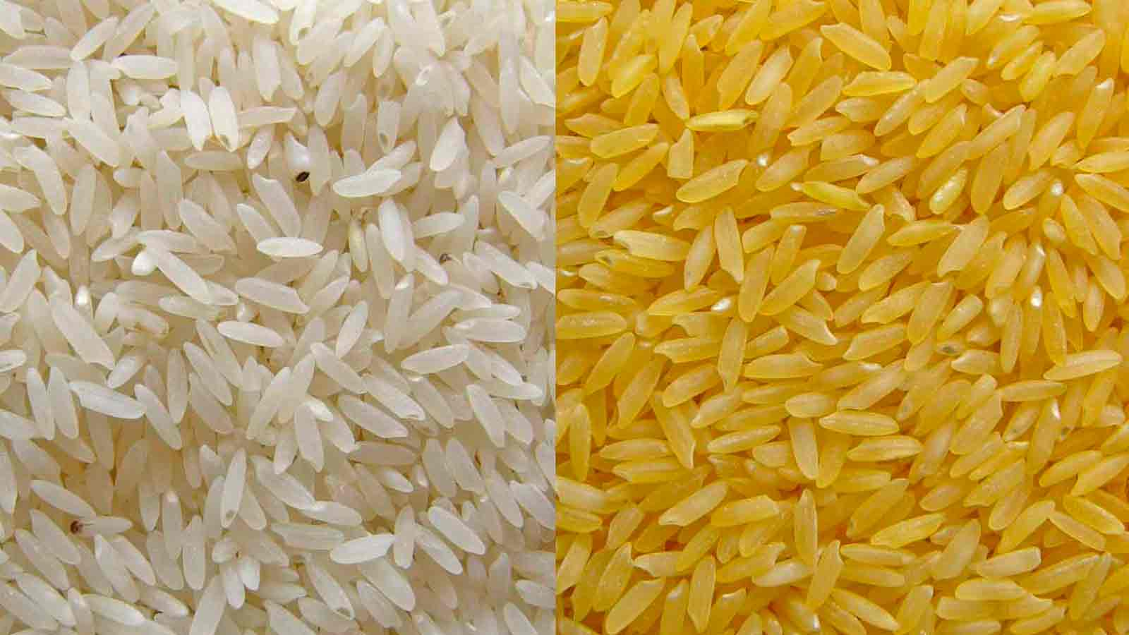 Booms and Busts in Organic Rice Protein Sales Market