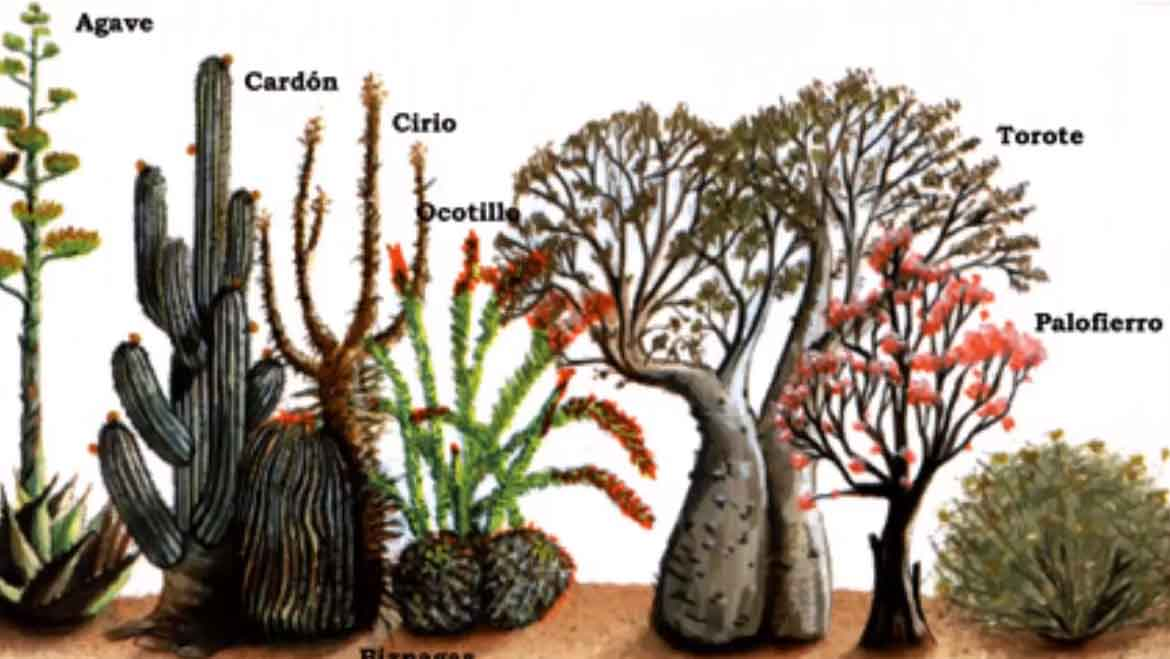 Desierto Plantas Related Keywords & Suggestions  Desierto Plantas
