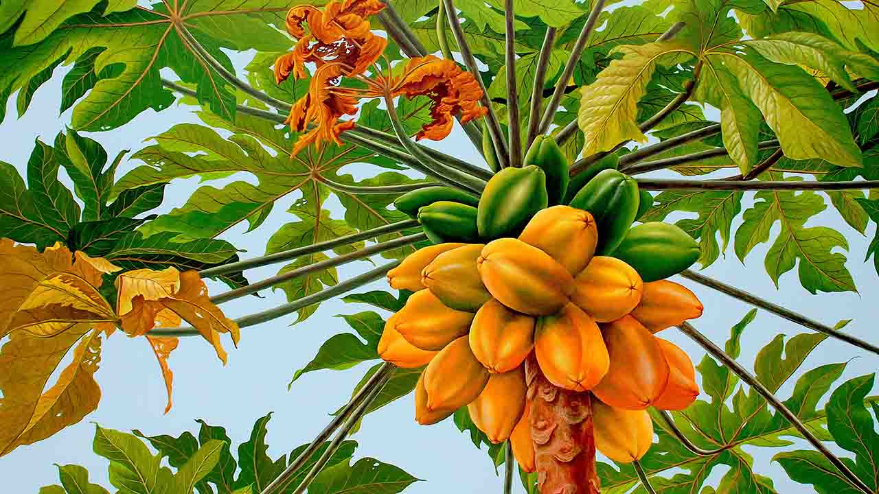 113- Papaya Tree