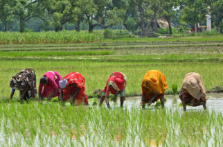 Women sow paddy in a field at Pawara, about 63 kilometers (39 miles) south of Allahabad, India, Friday, Aug. 12, 2005. Monsoon rains flooded farmland, destroying crops and homes of impoverished farm laborers across the country. (AP Photo /Rajesh Kumar Singh)