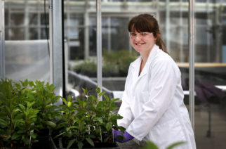PHOTO: Andy Jackson/Jack Photography. Tasmanian student Maddie Francis spends a week at Dow AgroScience Waireka Global Discovery Research Station in Omata, Taranaki.   Maddie Francis checks on apple seedlings in the glass house.