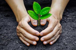 26711516 - two hands holding and caring a young green plant   planting tree   growing a tree   love nature   save the world