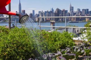 Urban rooftop farming in Brooklyn, New York