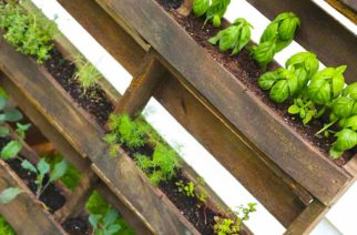 Transforma pallets en jardines interiores