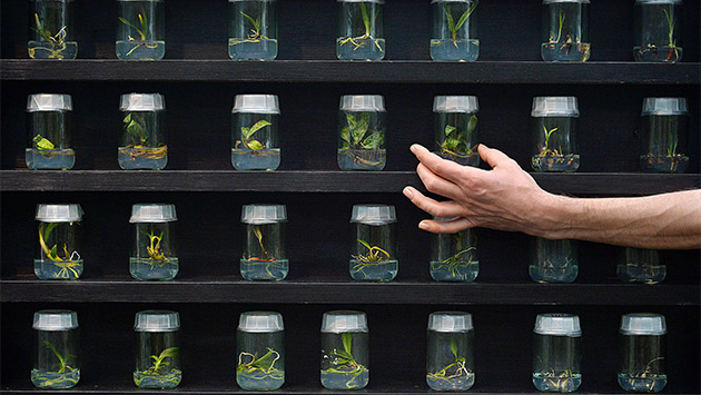An employee poses for pictures with jars containing orchid seedlings during a photocall for the 2014 'Orchids Festival' at the Royal Botanic Gardens in Kew, west of London, on February 6, 2014. The Festival opens to the public on February 8, 2014. AFP PHOTO / BEN STANSALL        (Photo credit should read BEN STANSALL/AFP/Getty Images)