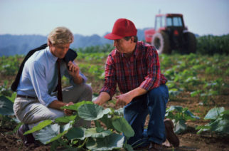 Farmer and businessman examining plant in field