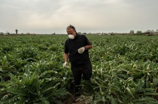 Agricultura vs Pandemia